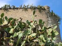 Calvi - Photo de Corse